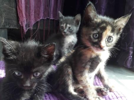 Extraordinary kitten resce