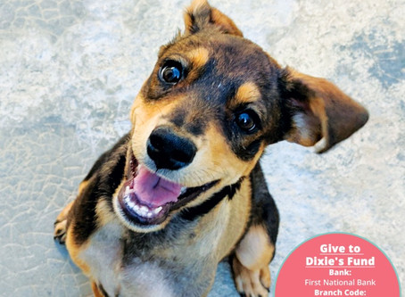 SPCA launches new exciting initiative - Dixie's Fund