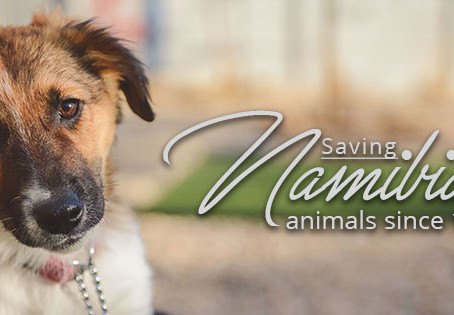 Saving Namibian animals since 1949
