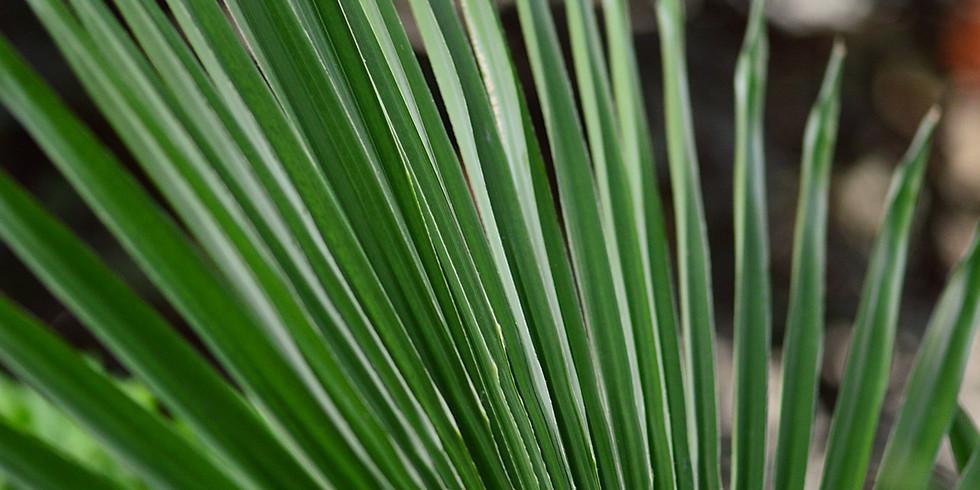 Palm Sunday Service (Rite I)