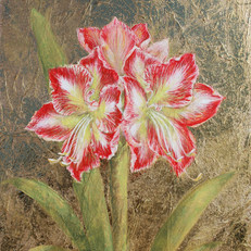 Golden Amaryllis II