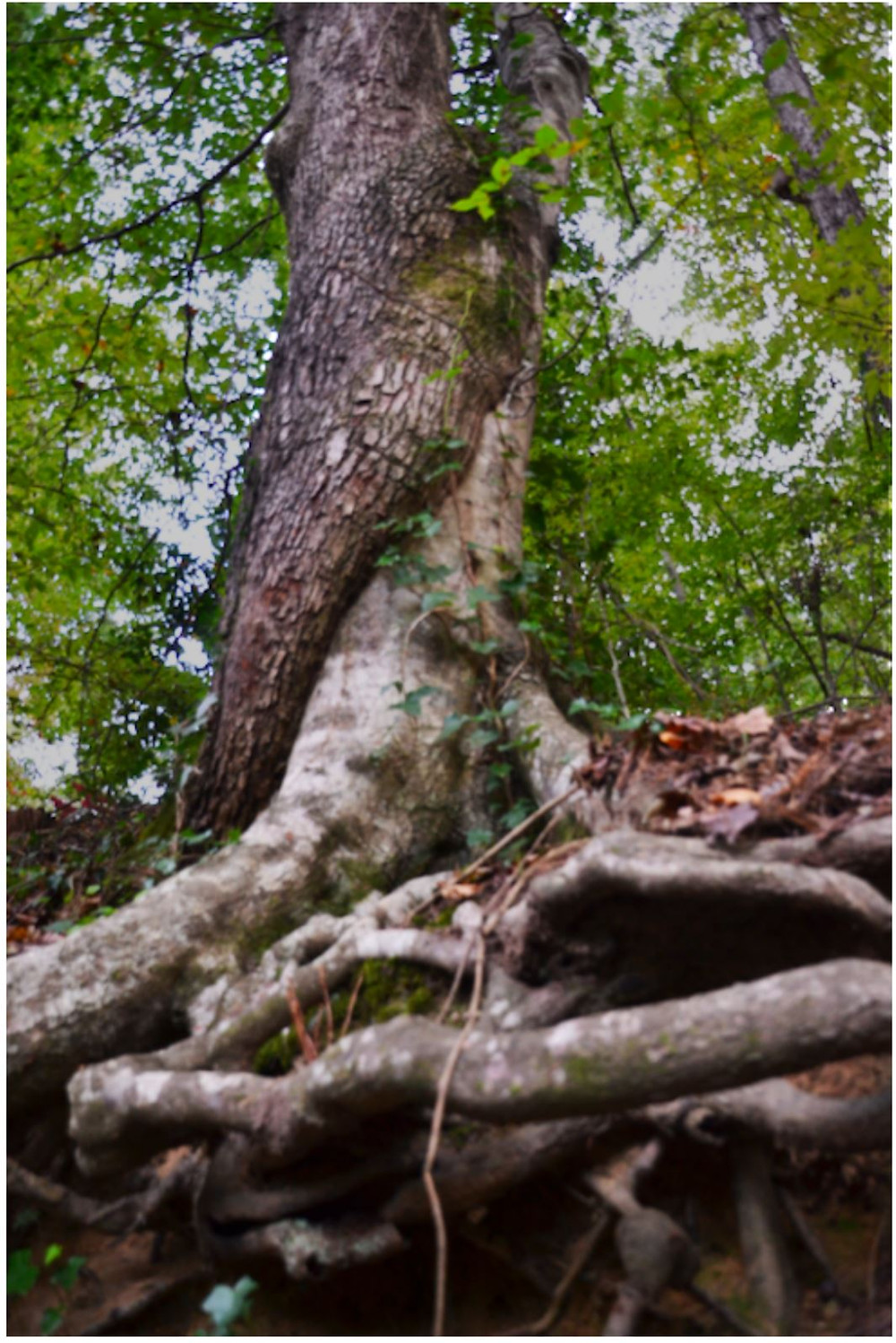 Intertwined Trees