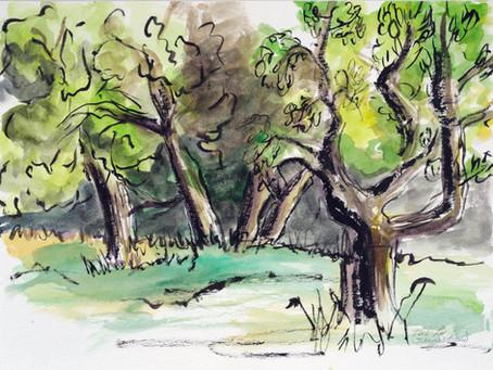 Toni-Lee Sangastiano's Olive Groves