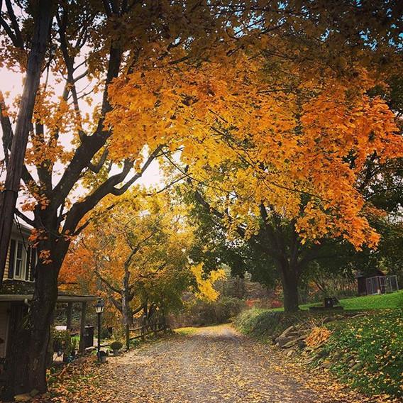 Autumn on the farm is my favorite.jpg