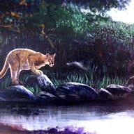 Marcus-Thompson-crouching-cougar.jpg