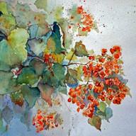 S-Joan-Giddings-hawthorne-berries.jpg
