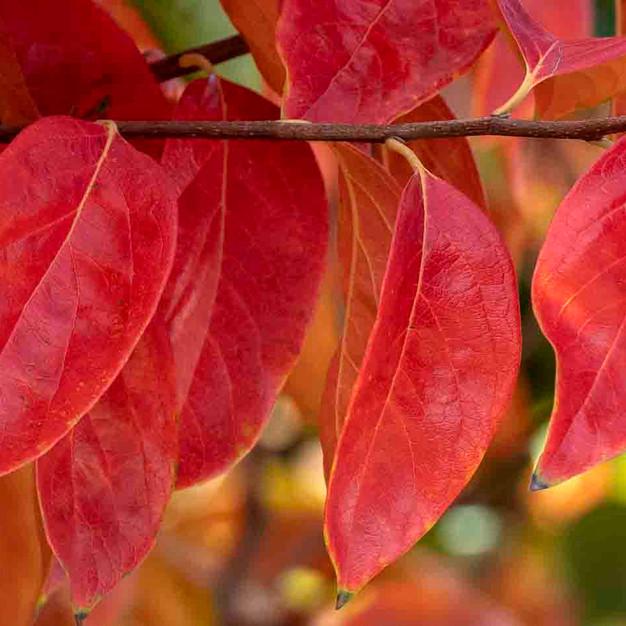 autumn _r 7555