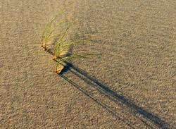 dunes redo Apri18 _7016 - Copy