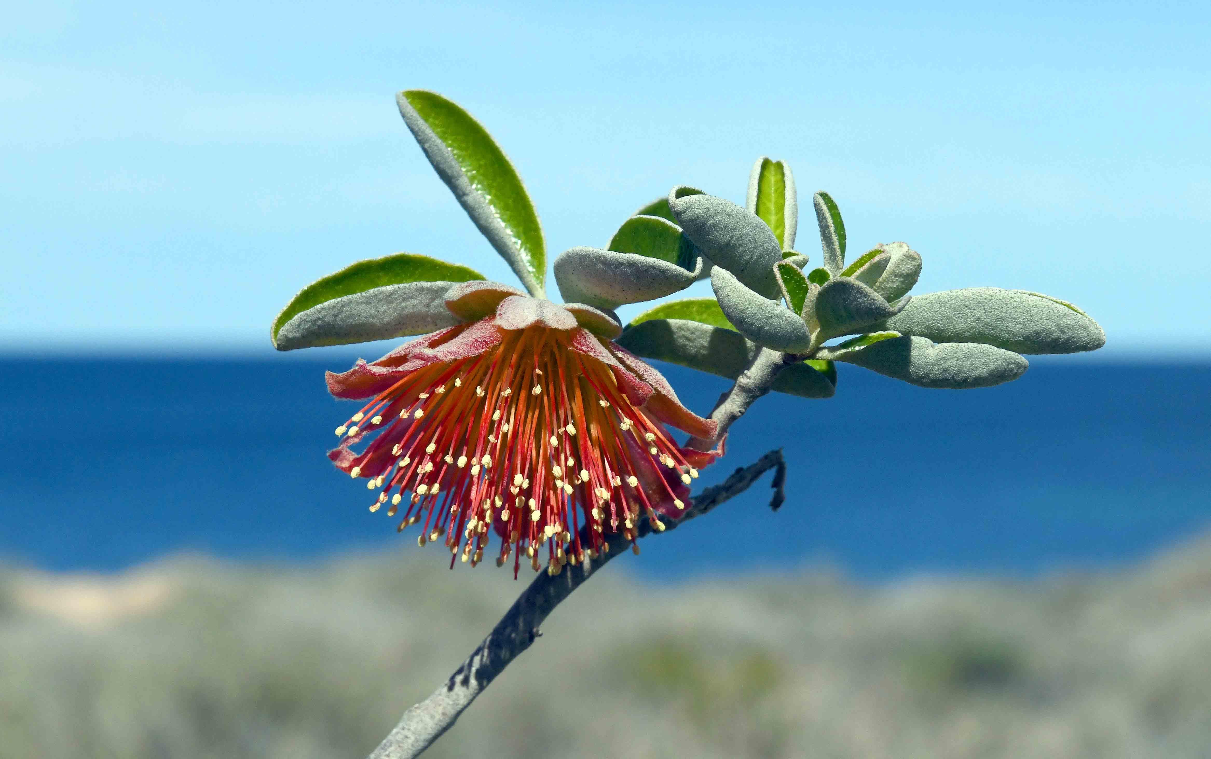 Coastal Flower_2435