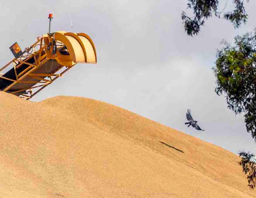 a wheat _r sss 6110