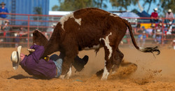 M bull by horns 6521