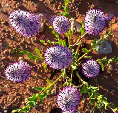 a t  Flower  rsss   _9357