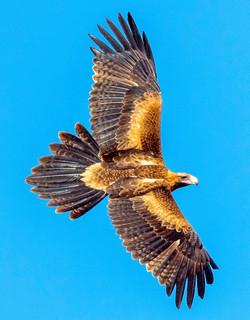 a 3 eagle 6703