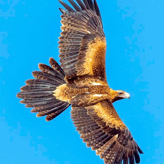 a 2 s  r eagle 6703