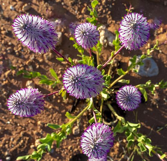 a t  Flower  _9357