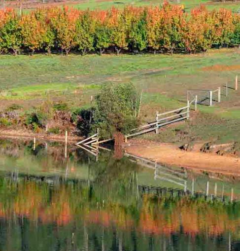 Autumn Dwellingup r zz  _7481