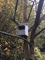 Robin box.jpg