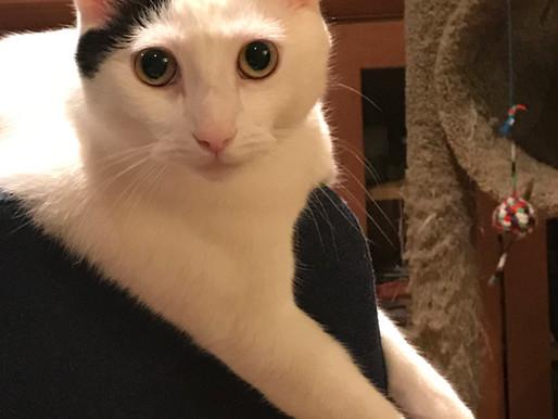 Pets of CALC: Kato