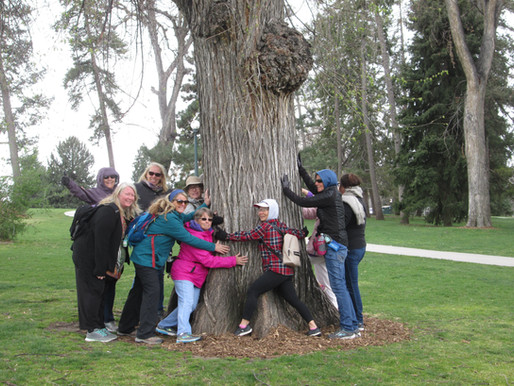 Climate Resilience in Denver: a four-part walking series