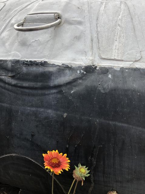 Flowers Like Motor Rigs