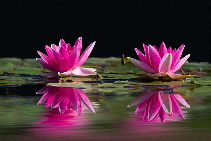 PEXEL nature-water-flowers-lake-46231.jp