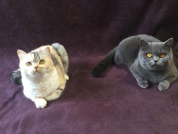 Yuno and Simka.JPG
