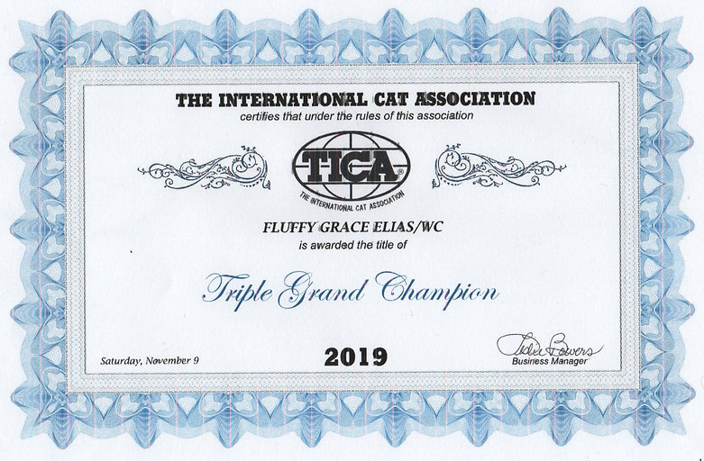 TICA%20Elias%20Triple%20Grand%20Champion