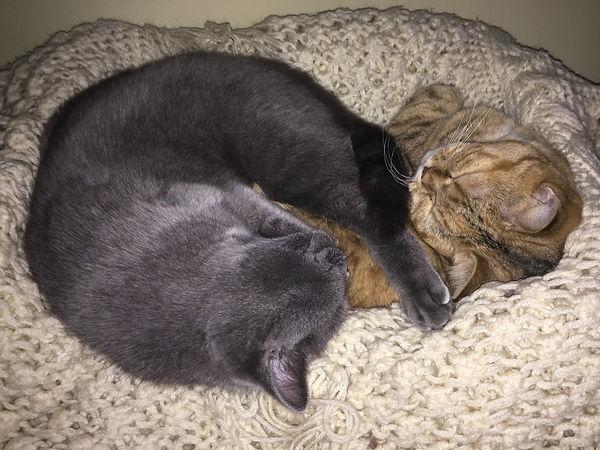 Кошки спят 2018.jpg