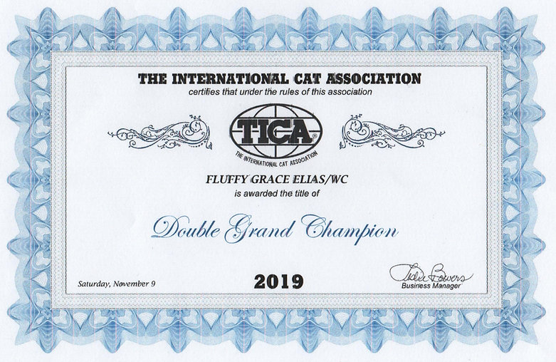 TICA%20Elias%20Double%20Grand%20Champion