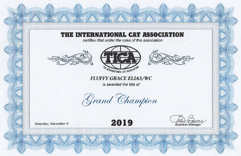TICA%20Elias%20Grand%20Champion%20Titles