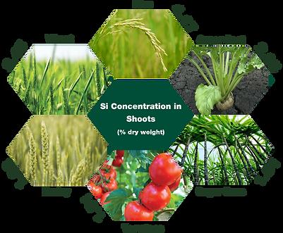 Benefits of Silicon fertilisers