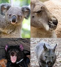 골코 동물원.jpg