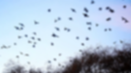 birds-flying-away-from-the-tree_41umfbmq
