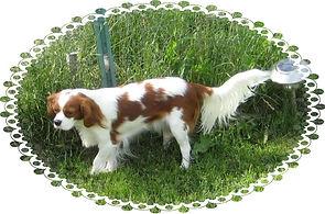 2008_Daisy.jpg