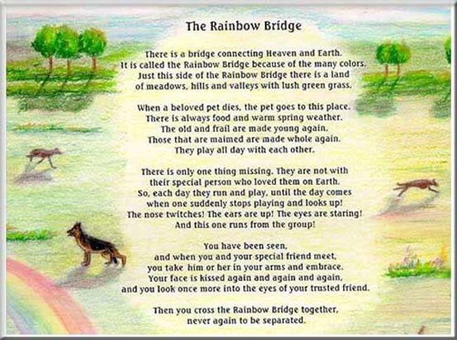 the-rainbow-bridge-poem.jpg