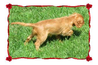 Goldie in red frame.jpg