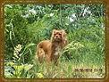 Sheba frame June 12 014.jpg