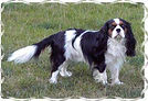 Monty in frame - best 2005 three.jpg