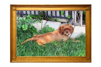 Goldie in frame two.jpg