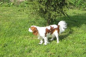 2007 Daisy.JPG