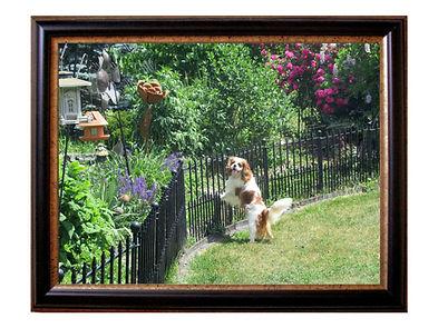 Skipper in garden.jpg