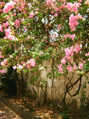 Beyond the Shades of Pink