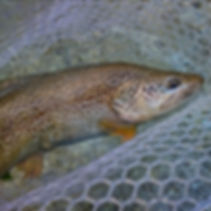 Click to see the gallery with pictures of our fish.