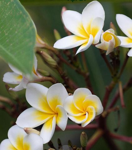 flowers website pics2.jpg