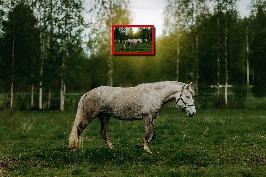 iso kuva vs. pieni kuva_3000px.jpg