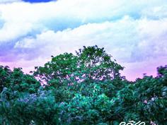 pale regard 'APPEL D'AIR' cover