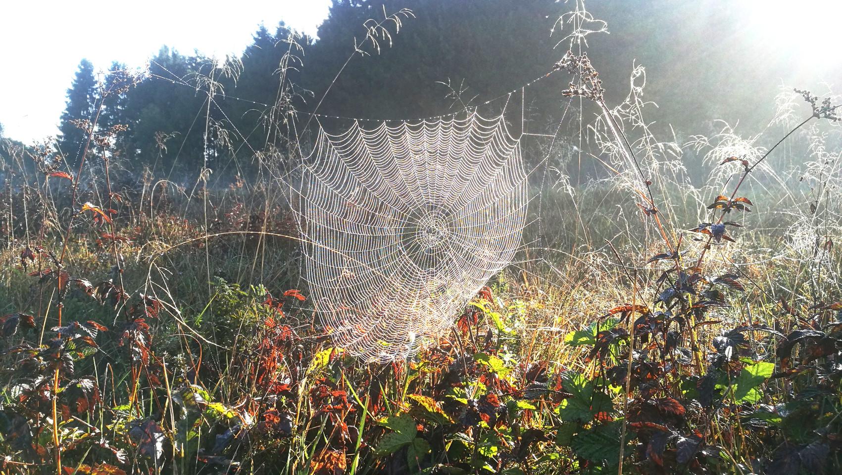 Spiderchen.jpg