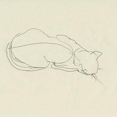 Katinka / eine Draufsicht auf die Katze