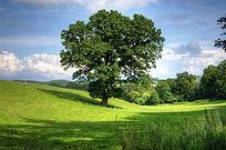 oak tree.jpg