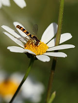 insect-3465521_960_720.jpg